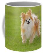 Pomeranian Dog Coffee Mug