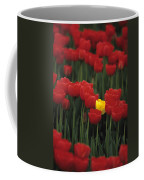 Rows Of Red Tulips With One Yellow Tulip Coffee Mug