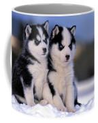 Siberian Husky Puppies Coffee Mug