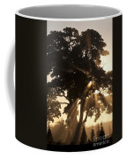 Silhouetted Tree With Sun Rays Coffee Mug