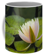 Soft Pink Coffee Mug