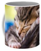 Sweet Small Kitten  Coffee Mug
