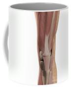 The Muscles Of The Knee Coffee Mug