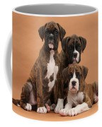 Three Boxer Puppies Coffee Mug