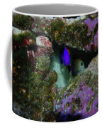 Tropical Fish In Cave Coffee Mug