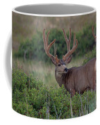Two In The Bush Coffee Mug by Jim Garrison