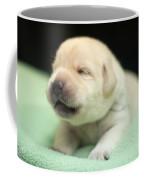 2 Week Old Lab Coffee Mug