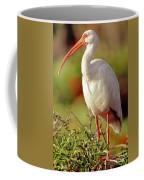 White Ibis Eudocimus Albus Coffee Mug