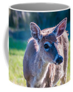 White Tail Deer Bambi In The Wild Coffee Mug