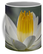 White Water Lily Coffee Mug by Heiko Koehrer-Wagner
