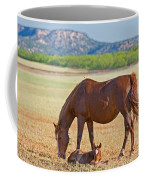 Wild Horses Mother And Foal Coffee Mug