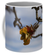 Wiliwili Flowers - Erythrina Sandwicensis - Kahikinui Maui Hawaii Coffee Mug