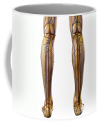 The Cardiovascular System Coffee Mug