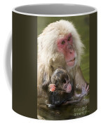 Snow Monkeys, Japan Coffee Mug