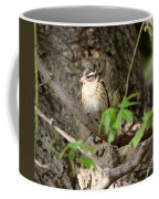 Rose Breasted Grosbeak Coffee Mug