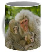 Snow Monkeys, Japan Coffee Mug