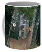 White-tailed Buck Coffee Mug