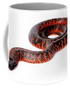Australian Reptiles On White Coffee Mug