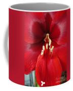Amaryllis Named Black Pearl Coffee Mug