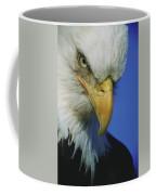 American Bald Eagle Haliaeetus Coffee Mug
