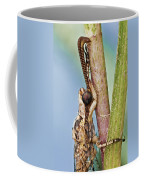 Antlion 31 Coffee Mug