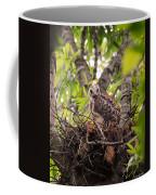 Baby Red Shouldered Hawk In Nest Coffee Mug