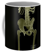 Bones Of The Pelvis Coffee Mug