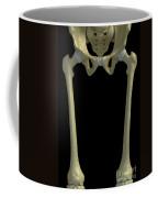 Bones Of The Upper Legs Coffee Mug