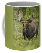 Bull Moose In Velvet  Coffee Mug