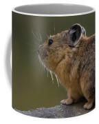 Close-up Of Pika Ochotona Princeps Coffee Mug