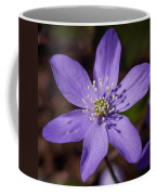 Common Hepatica Coffee Mug