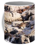 Falls Park Waterfalls Coffee Mug