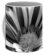 Gazania Named Big Kiss White Flame Coffee Mug