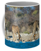 Giraffes Giraffa Camelopardalis Coffee Mug