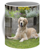 Golden Retriever Dog Coffee Mug