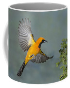 Hooded Oriole Coffee Mug