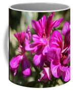 Ivy Geranium Named Contessa Purple Bicolor Coffee Mug