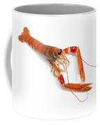 Langoustine Coffee Mug