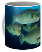 Large School Of Bumphead Parrotfish Coffee Mug