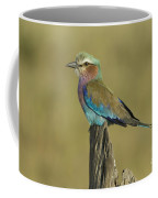 Lilac-breasted Roller Coffee Mug