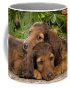 Long-haired Dachshunds Coffee Mug