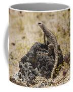 Mojave Desert Iguana Coffee Mug