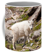 Mountain Goat Kid On Mount Evans Coffee Mug