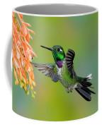 Purple-bibbed Whitetip Hummingbird Coffee Mug