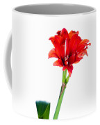 Red Amaryllis Coffee Mug