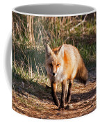 Red Fox In Prospect Park Coffee Mug