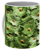 Russian Silverberry Leaf Sem Coffee Mug