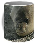 Southern Elephant Seal  Coffee Mug