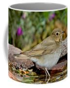 Swainsons Thrush Coffee Mug