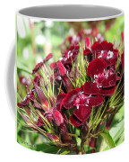 Sweet William Named Sooty Coffee Mug